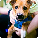 Adopt A Pet :: Henry (Has Application)