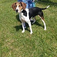 Adopt A Pet :: Trusty - Trenton, MO