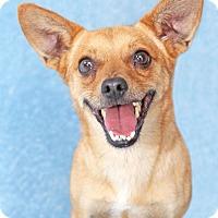 Adopt A Pet :: Zero - Encinitas, CA