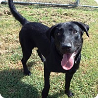 Adopt A Pet :: Sasha - Terrell, TX