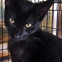 Adopt A Pet :: Anatol - Santa Fe, NM