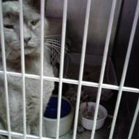 Adopt A Pet :: Damien - Myrtle Beach, SC
