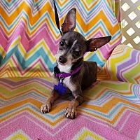 Adopt A Pet :: Malachi - Hamilton, ON
