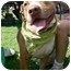Photo 1 - American Staffordshire Terrier Mix Dog for adoption in Los Angeles, California - Pirate