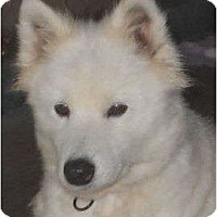 Adopt A Pet :: Josie - Arvada, CO