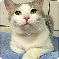 Adopt A Pet :: Candy - Centerburg, OH