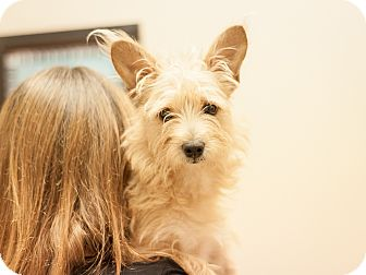 Terrier (Unknown Type, Small) Mix Dog for adoption in Dallas, Texas - Dougie