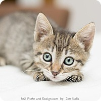 Adopt A Pet :: Becca - Fountain Hills, AZ