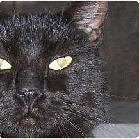 Adopt A Pet :: Toby - Columbus, OH