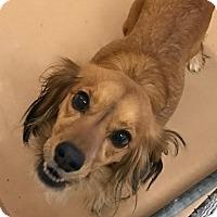 Adopt A Pet :: Eris Baker - Jersey City, NJ