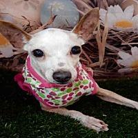 Adopt A Pet :: TAFFY - Upland, CA