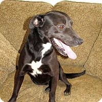 Adopt A Pet :: Donna - East Hartford, CT