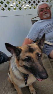 German Shepherd Dog Dog for adoption in Blackwood, New Jersey - Sarah