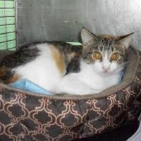 Adopt A Pet :: Ginny - Clinton, MO