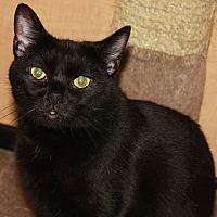 Adopt A Pet :: LINDA - Clayton, NJ