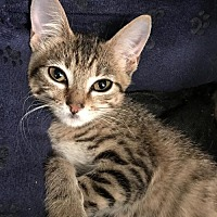 Adopt A Pet :: Princess Poppy - Dallas, TX