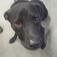 Adopt A Pet :: Abita - Phoenix, AZ