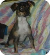 Chihuahua Dog for adoption in Antioch, Illinois - Lady PawPaw ADOPTED!!
