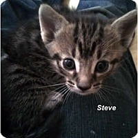 Adopt A Pet :: Steve - Jacksonville, FL