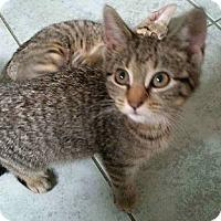 Adopt A Pet :: lilo and Sam - Whitestone, NY