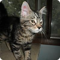 Adopt A Pet :: Hypno - Milwaukee, WI