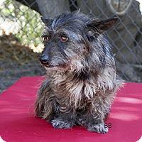 Adopt A Pet :: Toto - Santa Barbara, CA