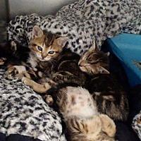 Adopt A Pet :: Terri - Harrisville, WV