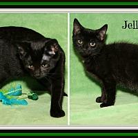 Adopt A Pet :: Crystal & Jellybean (Bonded) - Marietta, OH