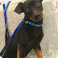 Adopt A Pet :: Jax - Santa Ana, CA