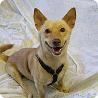 Adopt A Pet :: 'MILO' - Agoura Hills, CA
