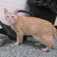 Adopt A Pet :: Denver - Williamsport, PA