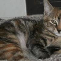 Adopt A Pet :: Molly - Potsdam, NY