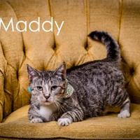 Adopt A Pet :: Hurricane Maddy - North Myrtle Beach, SC