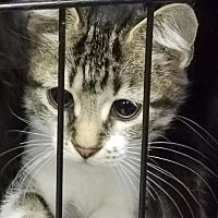 Adopt A Pet :: sprite - Henderson, KY