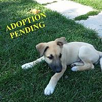 Adopt A Pet :: MAXWELL - Winnipeg, MB