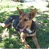 Adopt A Pet :: Roxana - West Los Angeles, CA