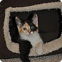 Adopt A Pet :: Jo Jo - Modesto, CA