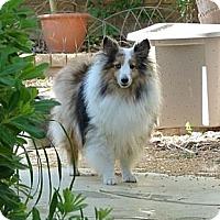 Adopt A Pet :: Picasso - La Habra, CA