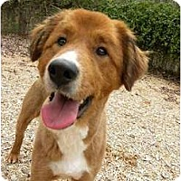 Adopt A Pet :: CJ Brown - Hagerstown, MD