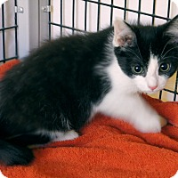 Adopt A Pet :: Lucy - Victor, NY