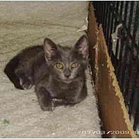 Adopt A Pet :: Ash - Stuarts Draft, VA