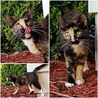 Adopt A Pet :: Sunday - Orlando, FL