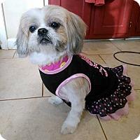 Adopt A Pet :: Rosie - Lawrenceville, GA