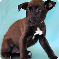 Adopt A Pet :: Bjork - Waldorf, MD