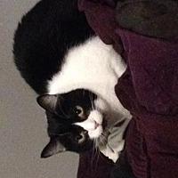 Adopt A Pet :: Mia - Lorain, OH