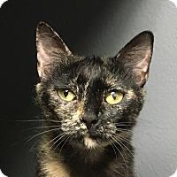 Adopt A Pet :: Ember - Winchester, CA