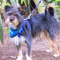 Adopt A Pet :: Skylar is just a puppy! - Redondo Beach, CA