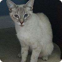 Adopt A Pet :: BIANCA - Raleigh, NC