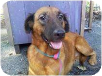 Belgian Malinois Mix Dog for adoption in Houston, Texas - GIDGET