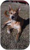 Cattle Dog Mix Dog for adoption in West Richland, Washington - Peaches
